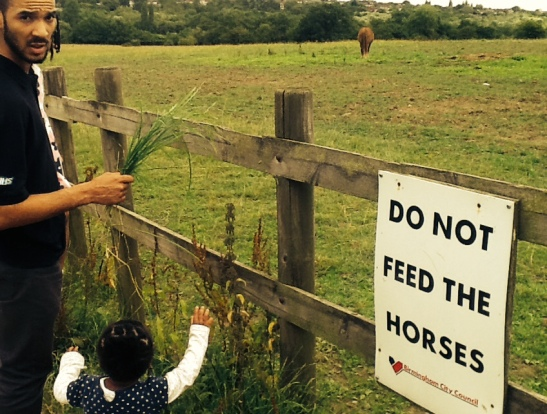 No Horse feeding